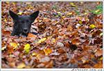 Фото Собачьей Осени