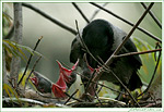 Фото: Вороны такие разные...  Photo: Crows are so different...