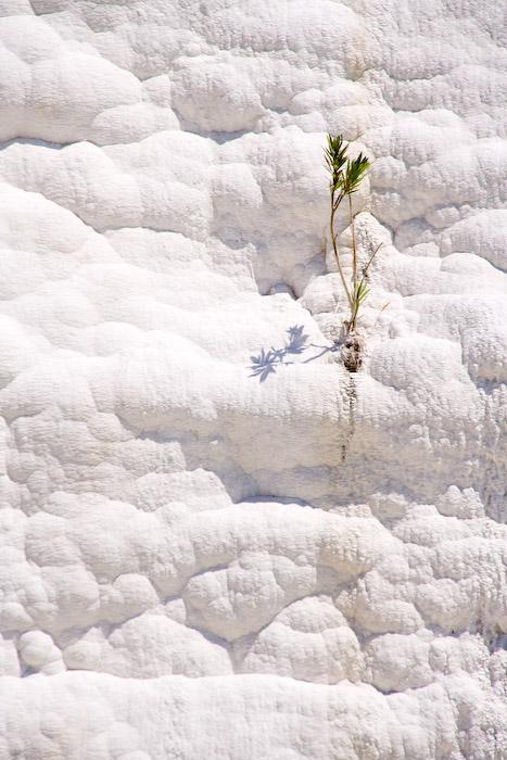 И на камнях растут деревья (по мотивам скандинавского кино)