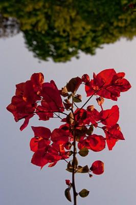 Цветок / Flower