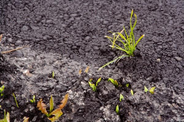 Суровая трава