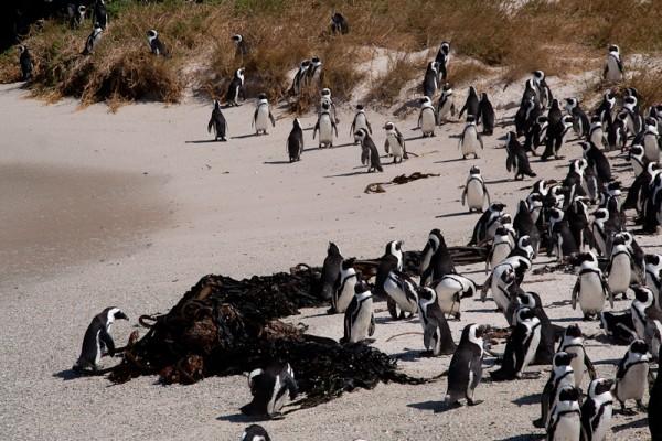 01. Колония пингвинов. На берегу