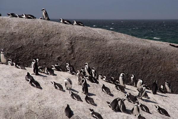 06. Колония пингвинов. Каменоломня.