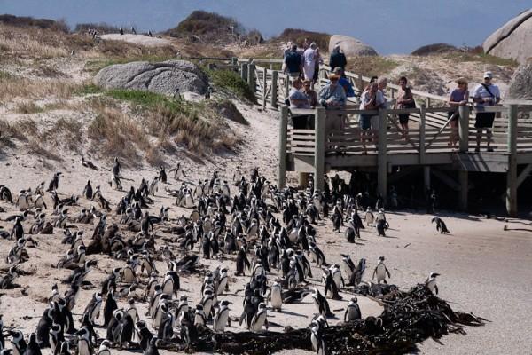 12. Колония пингвинов. С другой стороны